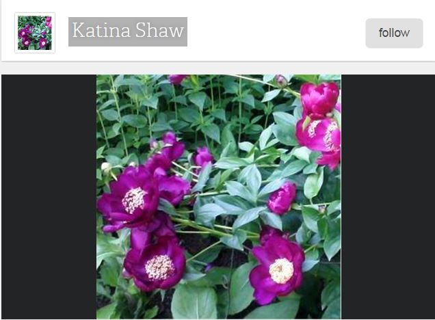 Awaken to Natural Wellness Katina Shaw